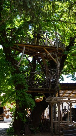 Its a Burl: 2 storey tree house!!!