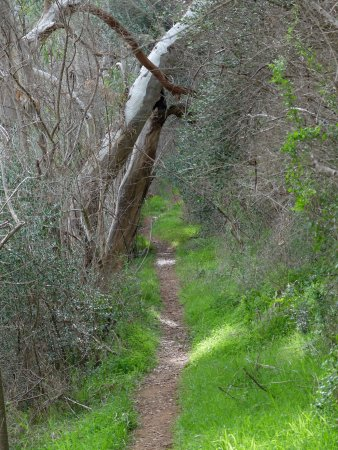 Adelaide Hills, Australia: A narrow part of the Rockdale Hill track. (Most of it is wide like a fire trail.)