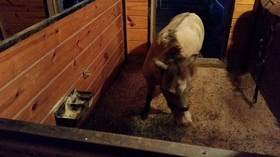 Ronks, Pensilvania: Pony