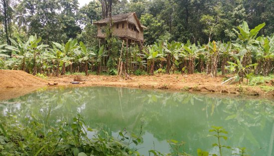 Keerikkadan's Green Park: Tree House