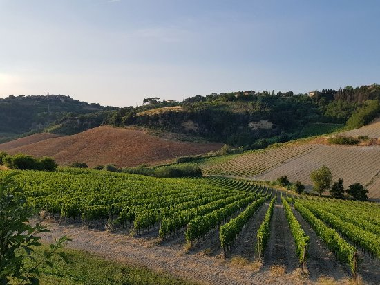 Terricciola, Italia: IMG-20170617-WA0040_large.jpg