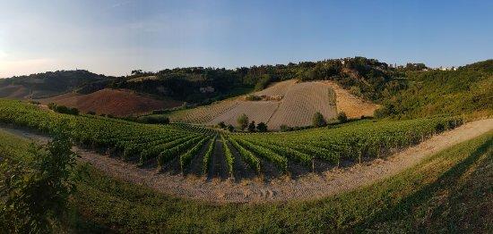 Terricciola, Italia: IMG-20170617-WA0042_large.jpg