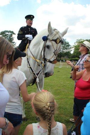 Camberley, UK: Mititary horses