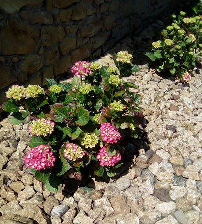 Saint-Avit-Senieur, France: Les Hortensias Rouges