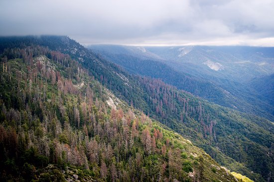 Three Rivers, CA: View from top of the mountain (taken with Relonch camera)