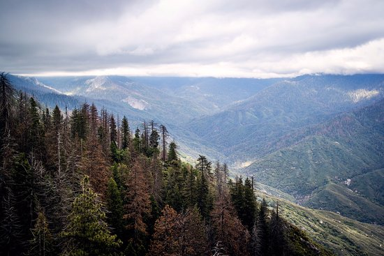 Три-Риверс, Калифорния: View from top of the mountain (taken with Relonch camera)