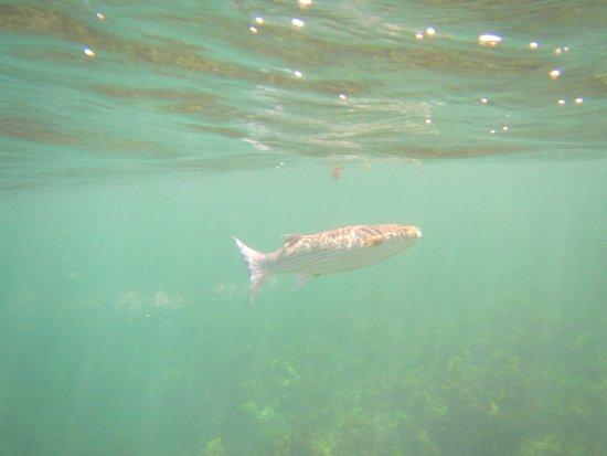 Praslin, Seychellerna: poisson dans l'eau