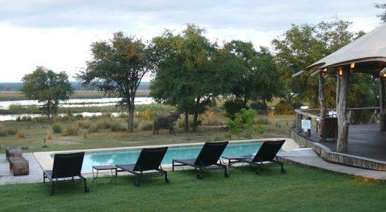 Lower Zambezi National Park, Zambia: Großer Pool am Restaurant