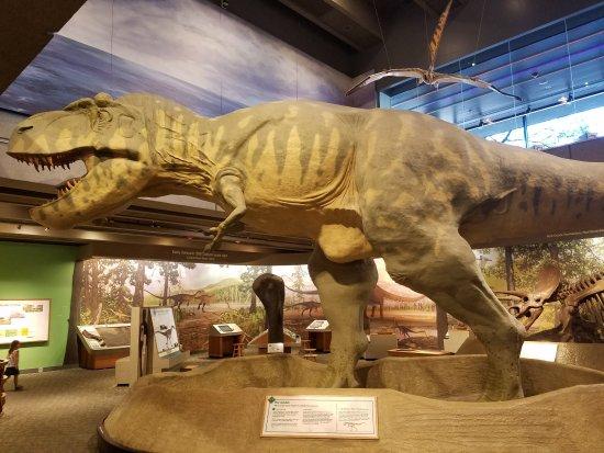 Museum of Science : T-Rex