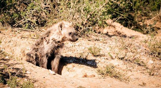 Национальный парк слонов Аддо, Южная Африка: photo0.jpg