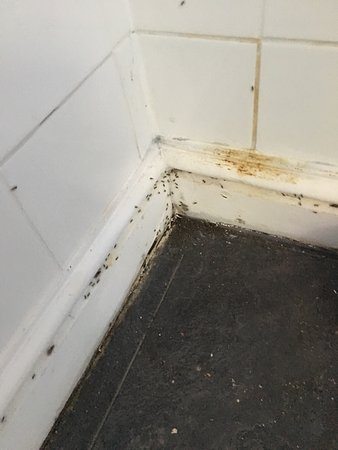 Street, UK: Ants in room 11