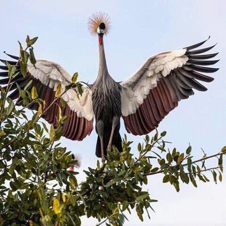 Касесе, Уганда: Kibale National Park