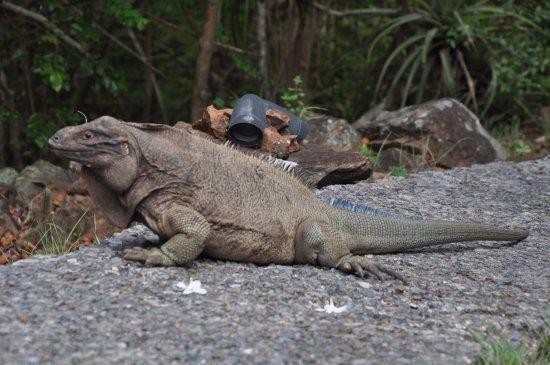 Foto de Guana Island