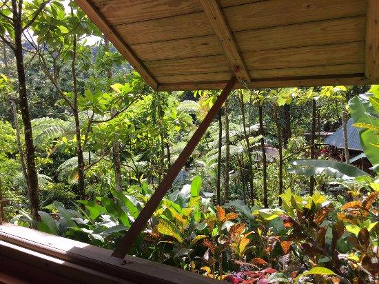 Marigot, Dominica: View from the casita...