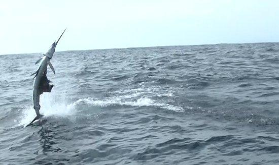 Nosara Paradise Rentals: Fishing