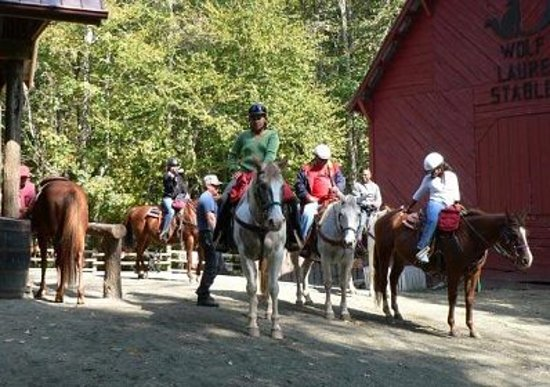 Burnsville, NC: Asheville Horseback Riding