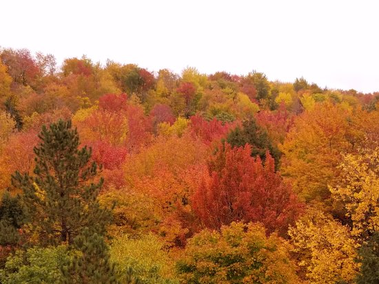Michigan: View from the Cut River Bridge in fall