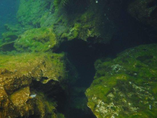 Yucatan, Mexique : snorkeling