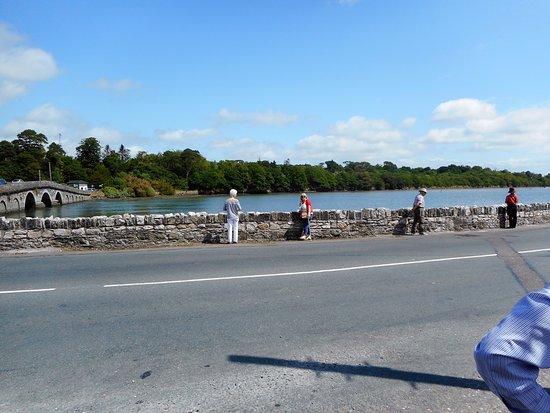 Cobh, Ireland: A bridge stop off where the interest was a bottle brush bush!