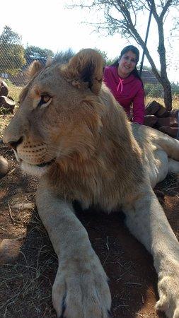 Akwaaba Lodge : Dentro de la Jaula de los leones
