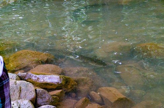 Pohnpei, Gefedereerde Staten van Micronesië: An eel in the pool