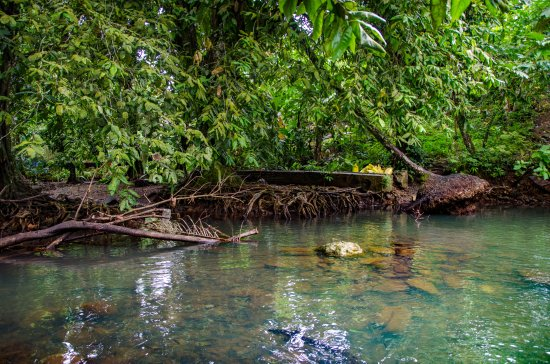 Pohnpei, Micronésia: The pool with the eels