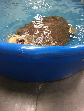 Surf City, Βόρεια Καρολίνα: The Karen Beasley Sea Turtle Rescue and Rehabilitation Center