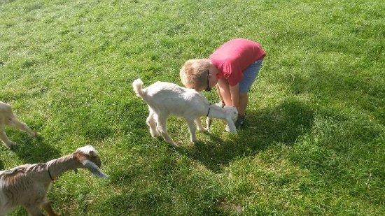 Friendly Farm: Baby goats