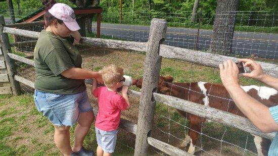 Friendly Farm: Feeding the baby cow