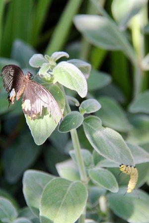 Malahide, Ireland: Dans la serre aux papillons