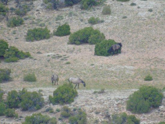 Lovell, WY: Devil's Outlook - Wild Mustangs