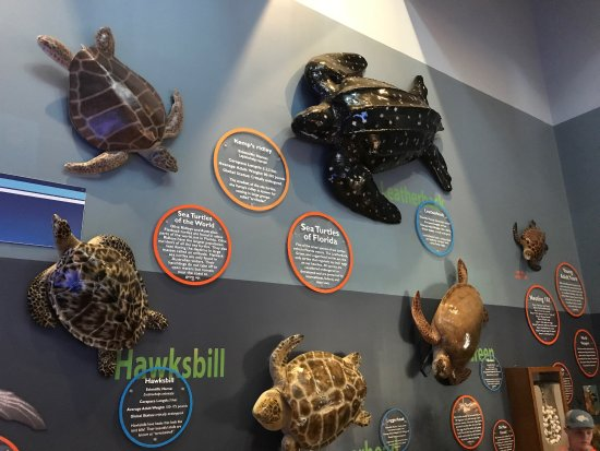 Loggerhead Marinelife Center : photo1.jpg