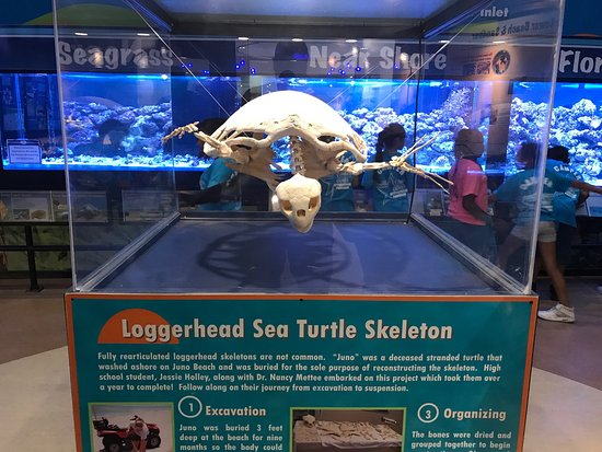 Loggerhead Marinelife Center : photo2.jpg