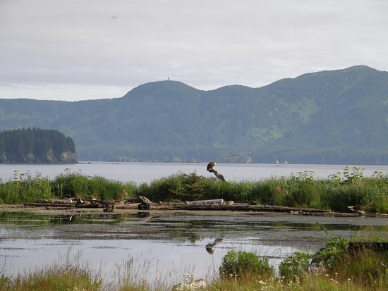 Kodiak, AK: Monashka bay view with an eagle