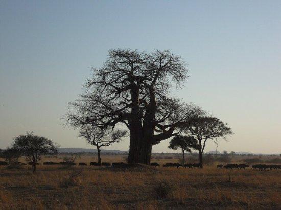 Tarangire National Park, تنزانيا: Tarangire National Park