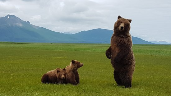 Kodiak, AK: Adventure opportunities abound - Bear View 6-22-17 with Sea Hawk Air