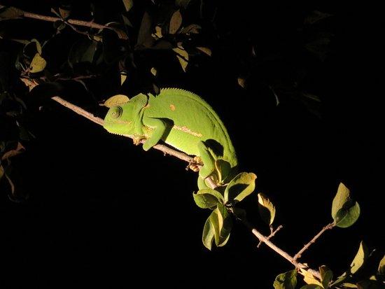 Foto de Manyeleti Game Reserve