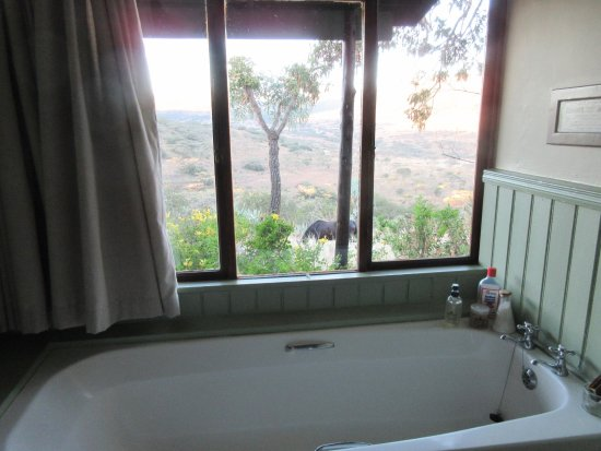 Bergville, Sudafrica: A bathroom with a view of Spioen Kop and a game reserve