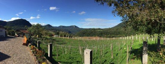 Jolimont Winery: photo0.jpg