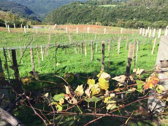 Jolimont Winery: photo2.jpg