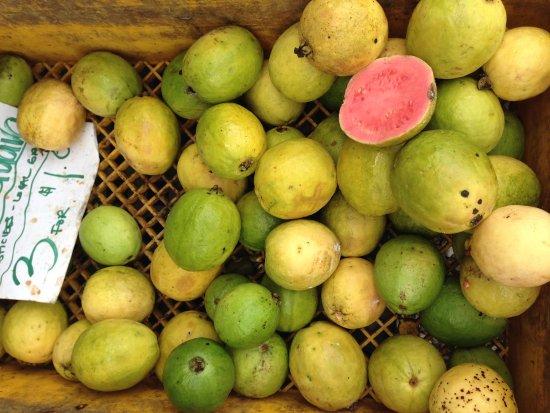 Pahoa, HI: Guava