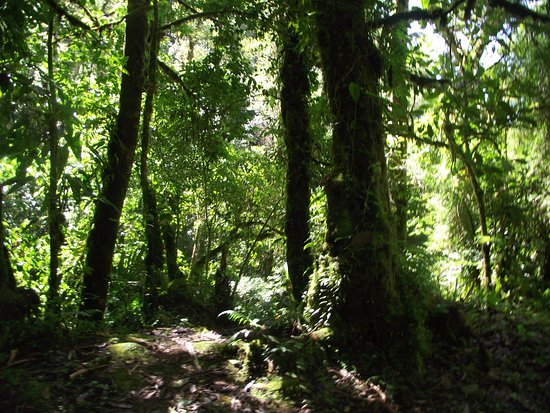 Sendero Los Quetzales (The Quetzales Trail): The Quetzales Trail in Boquete