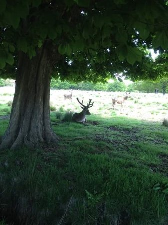 Richmond-upon-Thames, UK: An impressive stag
