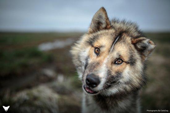 Selfoss, Islande : Pikkah the Greenlandic!