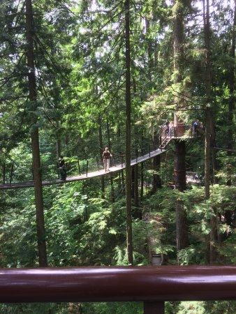 North Vancouver, Canadá: Treetop walk