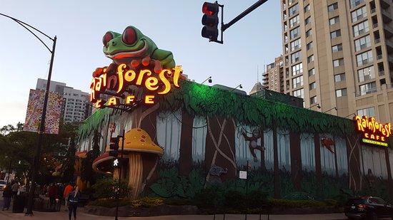 Rainforest Cafe Chicago Reviews