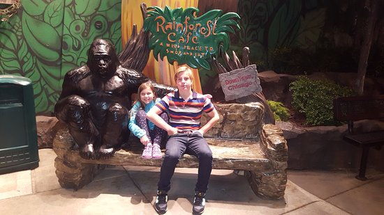 Chicago Hotels Near Rainforest Cafe