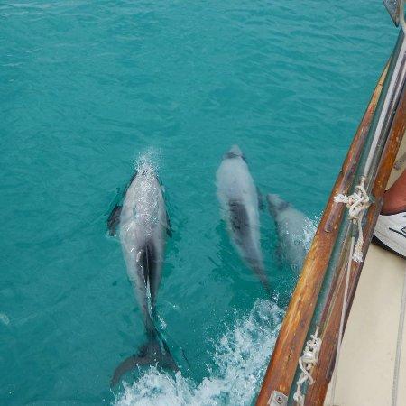 Akaroa, Nova Zelândia: Enjoying the wake