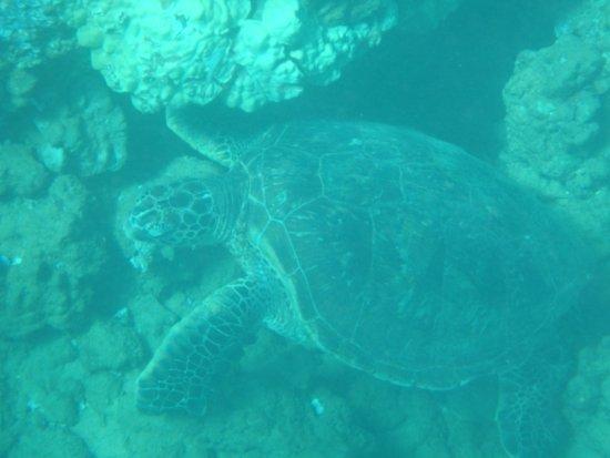 Maalaea, Havai: Turtle