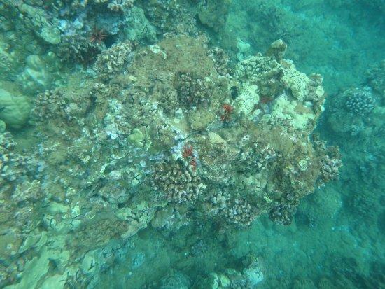 Maalaea, Havai: corals